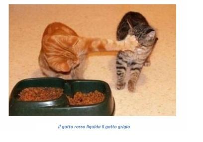liquidare_gatto_grigio