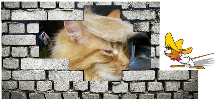 donald_cat_immagine